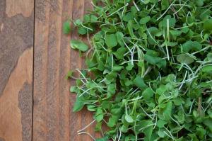 Local Organic Microgreens, Pea Shoots - Island Grown!- Code#: PR202184LCO