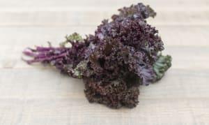 Organic Kale, Red- Code#: PR100139NCO