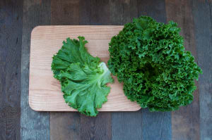 Organic Lettuce, Leaf- Code#: PR100349NCO