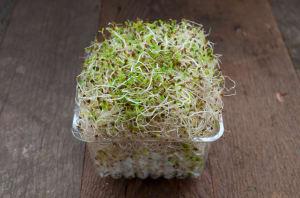 Local Organic Sprouts, Alfalfa - (100g)- Code#: PR100258LCO
