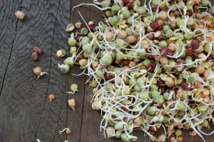 Local Organic Sprouts, Mixed Bean - (226g)- Code#: PR100895LCO