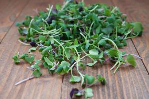 Local Organic Microgreens, Spicy Flare- Code#: PR216761LCO