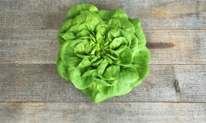 Local Organic Lettuce, Butter- Code#: PR100147LCO