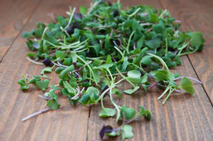 Local Organic Microgreens, Spicy Flare- Code#: PR216761LCO