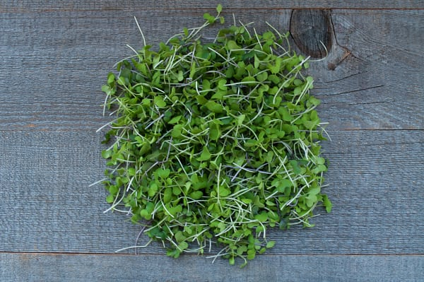 Local Microgreens, Radish Shoots