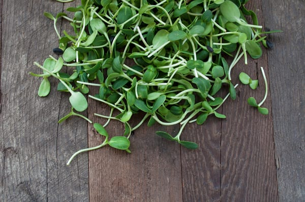 Local Organic Microgreens, Sunflower Shoots