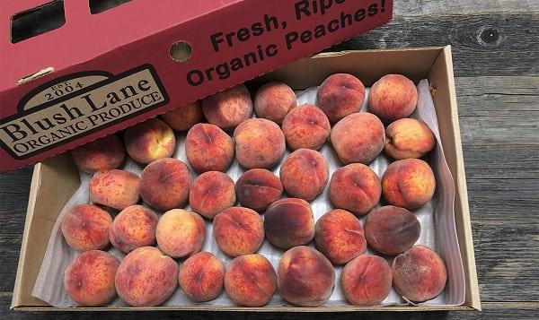 Local Organic Peaches, Tree Ripened