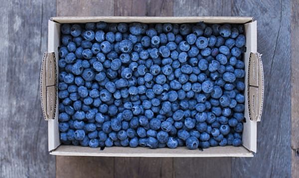 Local Organic Blueberries, 5 lb Box