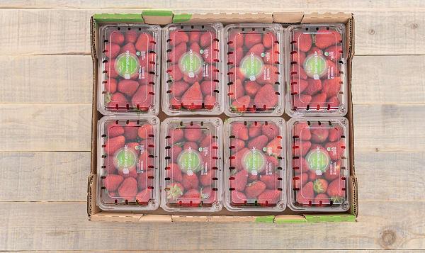 Organic Strawberries - CASE - CA/MEX