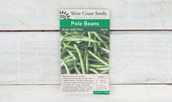 Blue Lake  Pole Bean Seeds
