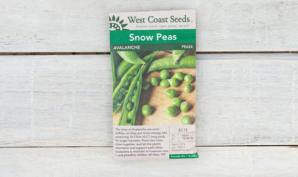 Avalanche  Snow Pea Seeds