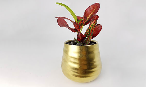 Wee Magical Tropical in a Magical Golden Pot