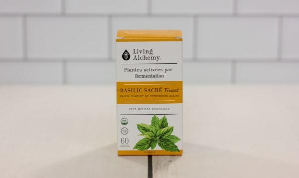 Organic Holy Basil Alive
