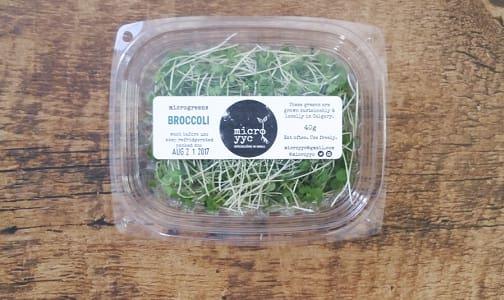 Local Microgreens, Broccoli - Compostable materials- Code#: PR147368LCN