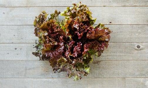 Local Organic Lettuce, Red Leaf - BC Grown- Code#: PR100151LCO
