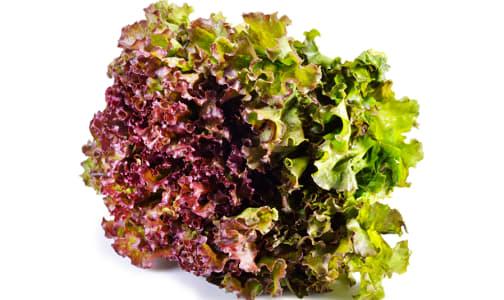 Organic Lettuce, Red Leaf - BC/US- Code#: PR100151NCO