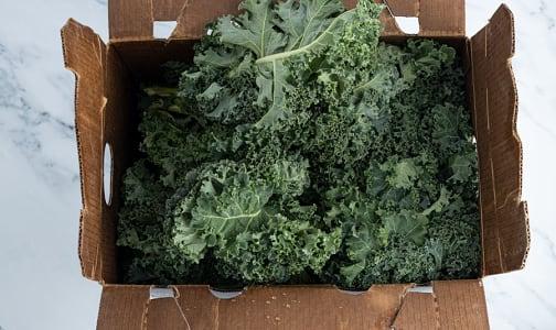 Organic Kale, Green - Case- Code#: PR217204NCO