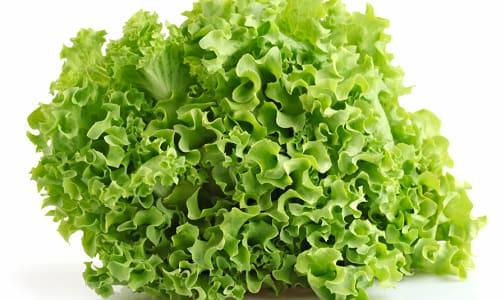 Organic Lettuce, Green Leaf- Code#: PR100148NCO