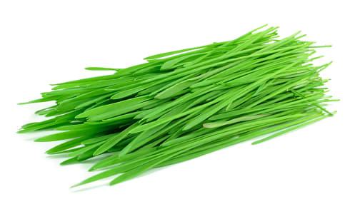 Local Wheatgrass- Code#: PR216656LCN