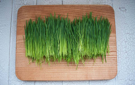 Local Organic Wheat Grass- Code#: PR147267LCO