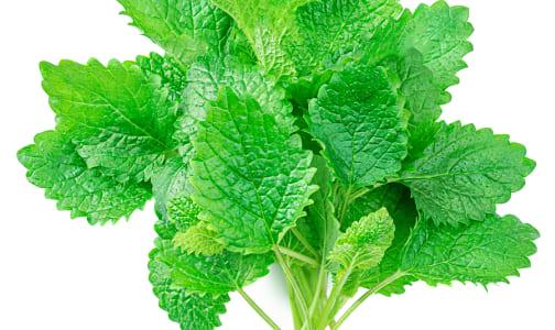 Local Organic Herbs, Mint- Code#: PR155674LCO