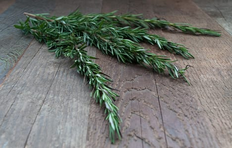Local Organic Herbs, Rosemary- Code#: PR166093LCO