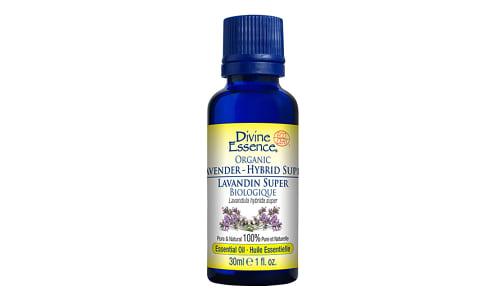 Organic Lavender Hybrid - Super- Code#: PC3580