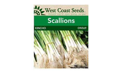 Kincho  Scallion Onion Seeds- Code#: BU1864