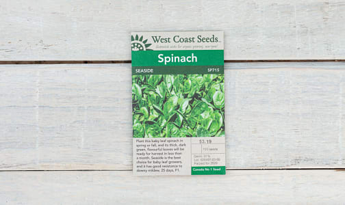 Seaside  Spinach Seeds- Code#: BU1893