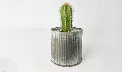 Wee Cactus Planter in a Tin Pot- Code#: FF1420