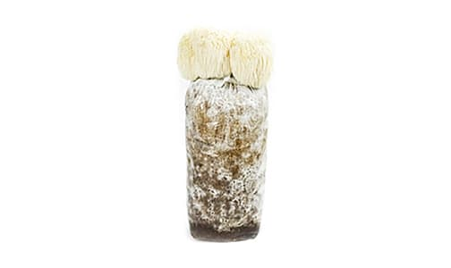 Lion's Mane Mushroom Home Grow Kit- Code#: PR0048