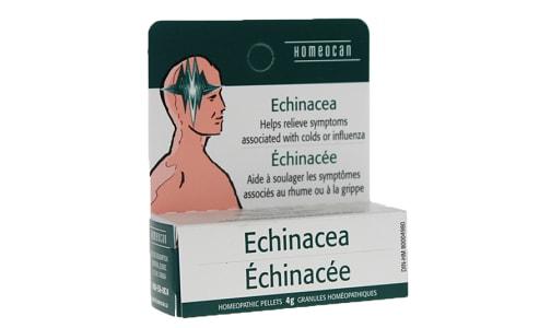 Echinacea- Code#: VT0603