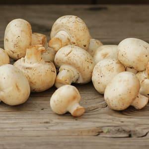 Local Organic Mushrooms, White - BC Grown- Code#: PR101152LPO