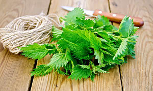 Local Stinging Nettles - Wildcrafted- Code#: PR216915LPN