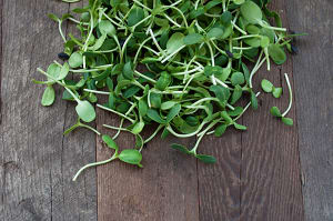 Local Organic Microgreens, Sunflower Shoots- Code#: PR216726LCO