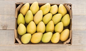 Organic Mangos, Ataulfo - CASE- Code#: PR217051NCO