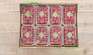 Organic Strawberries - CASE - CA/MEX- Code#: PR216876NCO