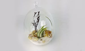 Oval Terrarium with one Air plant- Code#: FF0098