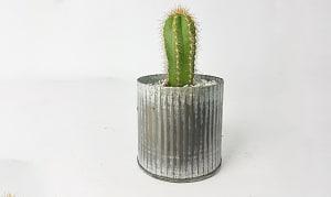 Wee Cactus Planter in a Tin Pot- Code#: FF1420