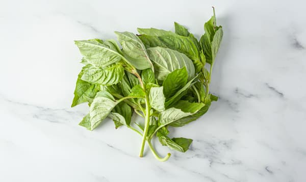 Organic Basil, Case
