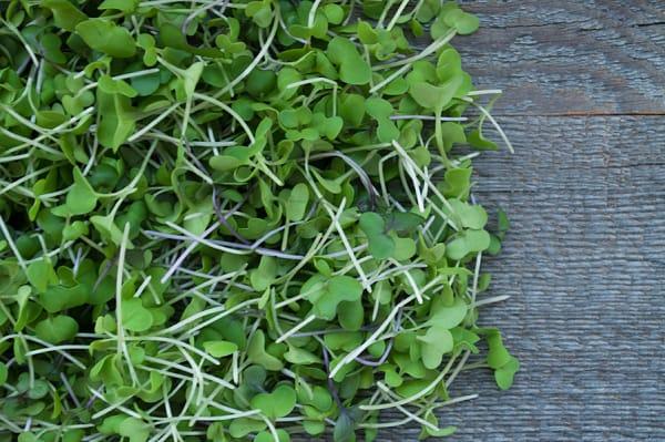 Local Organic Microgreens, Broccoli