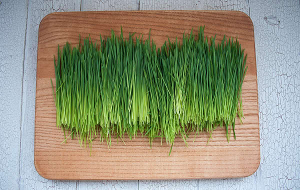 Local Organic Wheat Grass
