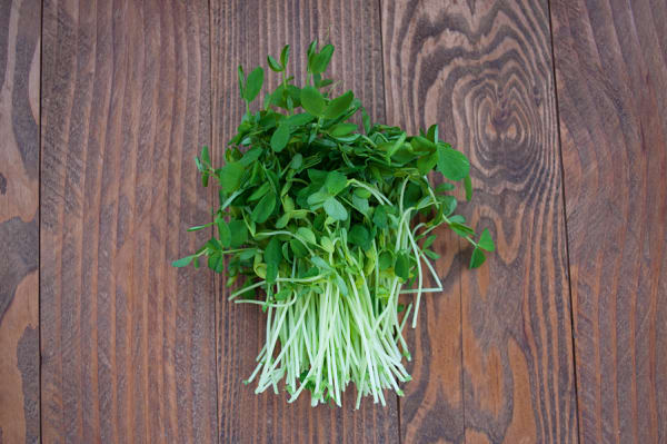 Local Organic Sprouts, Pea Shoots