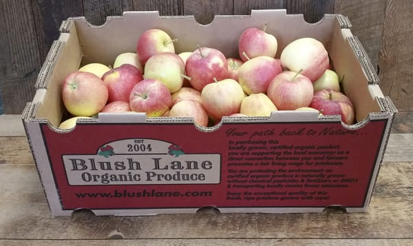 Organic Apples, Gala, 20lbs Case - Blush Lane Orchard