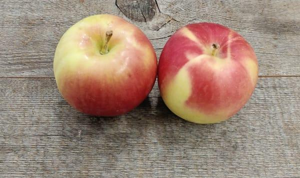 Local Organic Apples, Sunrise
