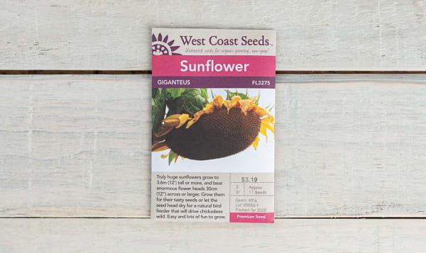 Giganteus  Sunflower Seeds