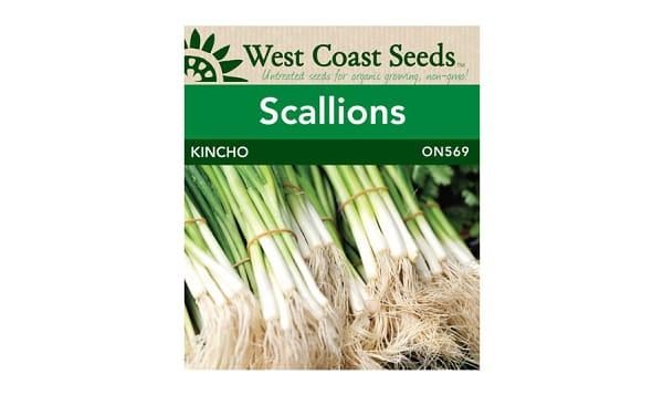 Kincho  Scallion Onion Seeds