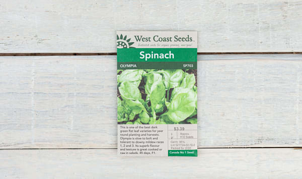 Olympia  Spinach Seeds