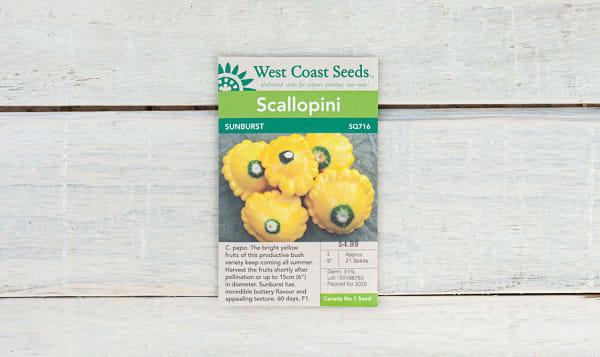 'Sunburst  Zucchini Seeds