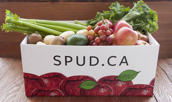 Organic Harvest Box - Large